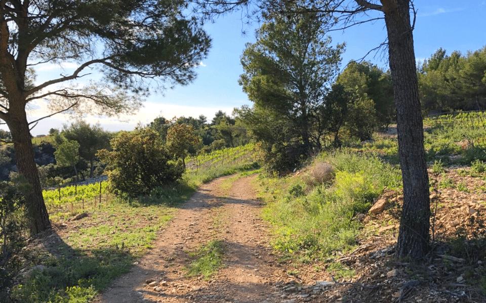 Fontaine-de-Vaucluse Loop